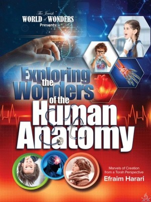 Exploring the Wonders of the Human Anatomy